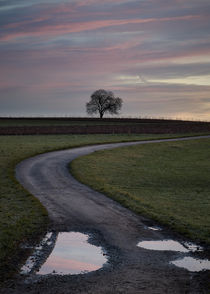 nach dem Regen by Hans-Peter Iseli