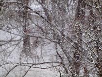 Winterlandschaft im Schneegestöber, winter and snow by Dagmar Laimgruber