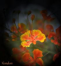 Flower closeup by Nandan Nagwekar