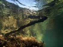 Landscape Unterwasser | In der Passage von Ute Niemann