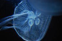 jellyfish... 2 von loewenherz-artwork
