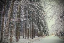 Winterwald I von Christine Horn