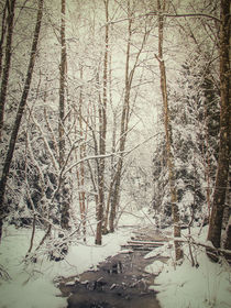 Winterwald II by Christine Horn