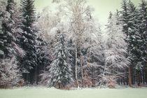 Winterwald IV by Christine Horn