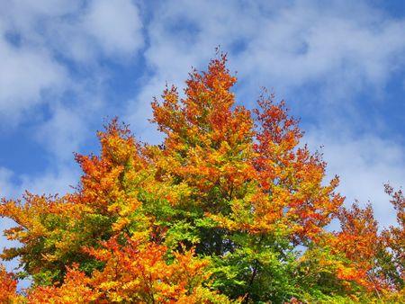 Herbstwald-1