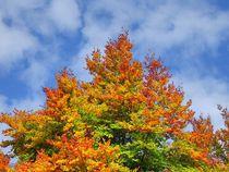 Herbstlaub 1 von kattobello