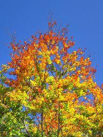 Herbstlaub 2 von kattobello