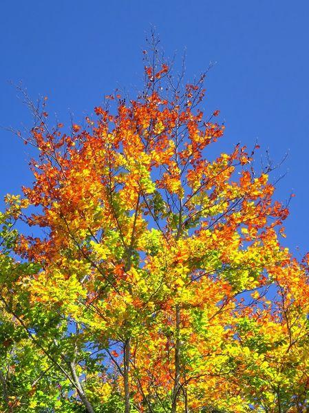 Herbstwald-3