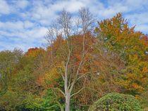 Herbstwald von kattobello