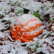 Kürbis im Schnee von kattobello