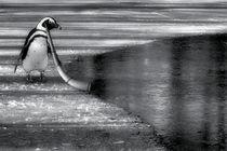 Stille Wasser by garrulus-glandarius