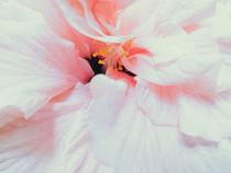 Hibiscus II by Andrei Grigorev