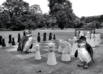Schach im Stadtpark by garrulus-glandarius
