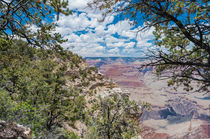 Bäume am Grand Canyon von reisen-fotografie-blog