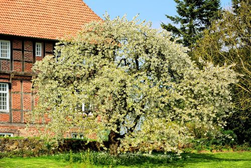 Dsc-1400-obstbaum-gut-brodau
