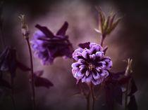 Purple by kappelnation
