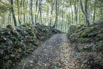 Walking Between Rocks and Trees von Marc Garrido Clotet