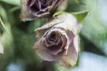 Rosen Aquarell von Petra Dreiling-Schewe
