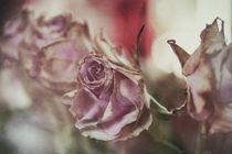 Nostalgie Rosen by Petra Dreiling-Schewe