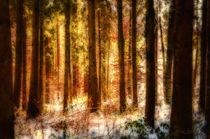 Farben im Winterwald von Nicc Koch