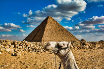 Camel Holding Up Great Pyramid by Andy Doyle
