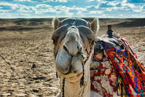 Cute Camel Face View von Andy Doyle