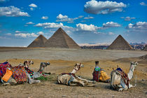 Camels with Great Pyramids by Andy Doyle