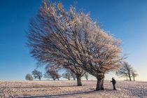 Windbuchen mit Fotograf von Christine Horn