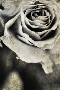 La Vie En Rose von Petra Dreiling-Schewe