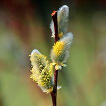 Frühlingserwachen by kattobello