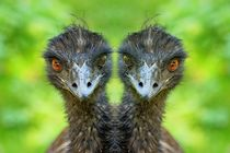 Zweikopf Emu von kattobello