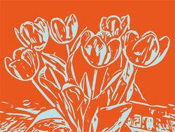 Blumenbilder-tulpen-orange