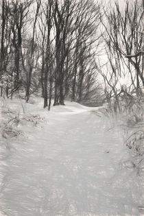 Snowy Walk by Colin Metcalf