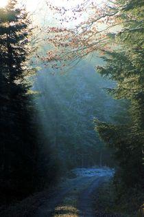 Verzauberter Waldspaziergang von kraeuterfotografie