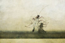 Insekt by Petra Dreiling-Schewe