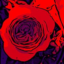 Blumenbilder-red-blue-v026