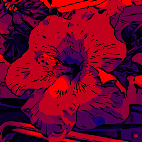 Blumenbilder-red-blue-v0213