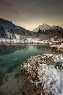 Green beauty by Bor Rojnik