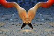 Flamingo Gruß von kattobello