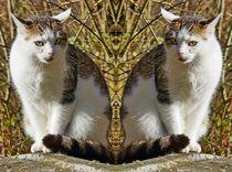 Doppelte Hauskatze von kattobello
