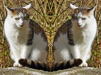 Doppelte Hauskatze by kattobello