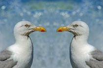 Zwei Möwen in der Nordseegischt von kattobello