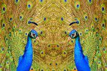 Blauer Pfau im Spiegelbild 2 von kattobello