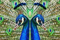 Blauer Pfau im Spiegelbild 1 von kattobello