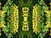Goldregen Traum von kattobello