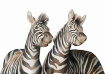 Zebras Watercolor by zapista
