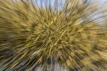 Zoom Burst by Wilhelm Dreyer