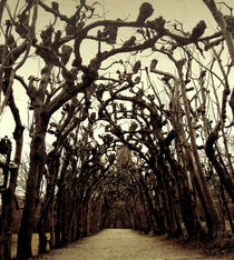 Knobby mystical trees by salogwynfineart