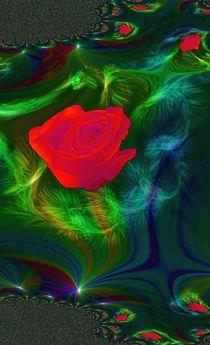 Rose von Monika Amann