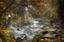Das Herz des Waldes by Simone Wunderlich